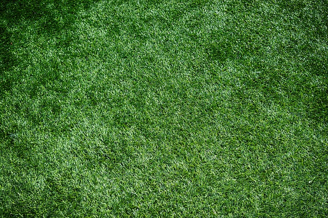 synthetic grass or real grass