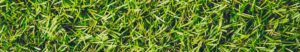 is Artificial Turf safe for your family?