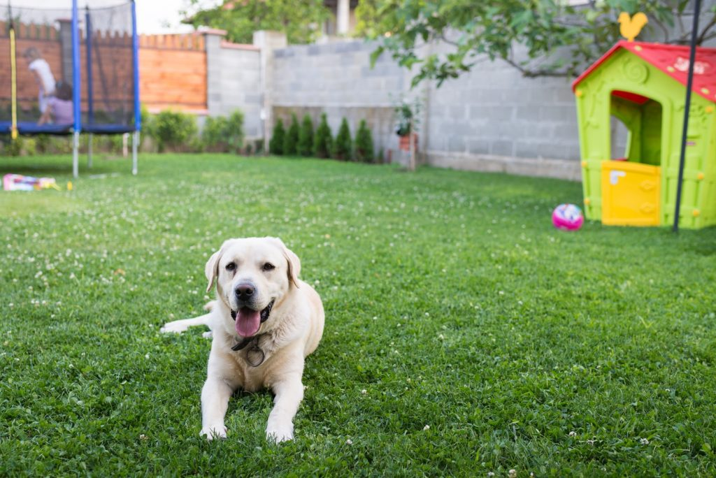 Top Qualities for the Best Artificial Grass for Dogs ...