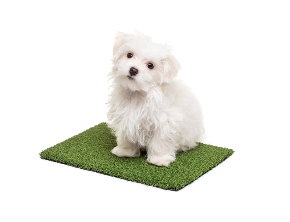 cute puppy in artificial grass