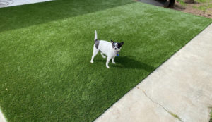 Best Artificial Grass for Dogs