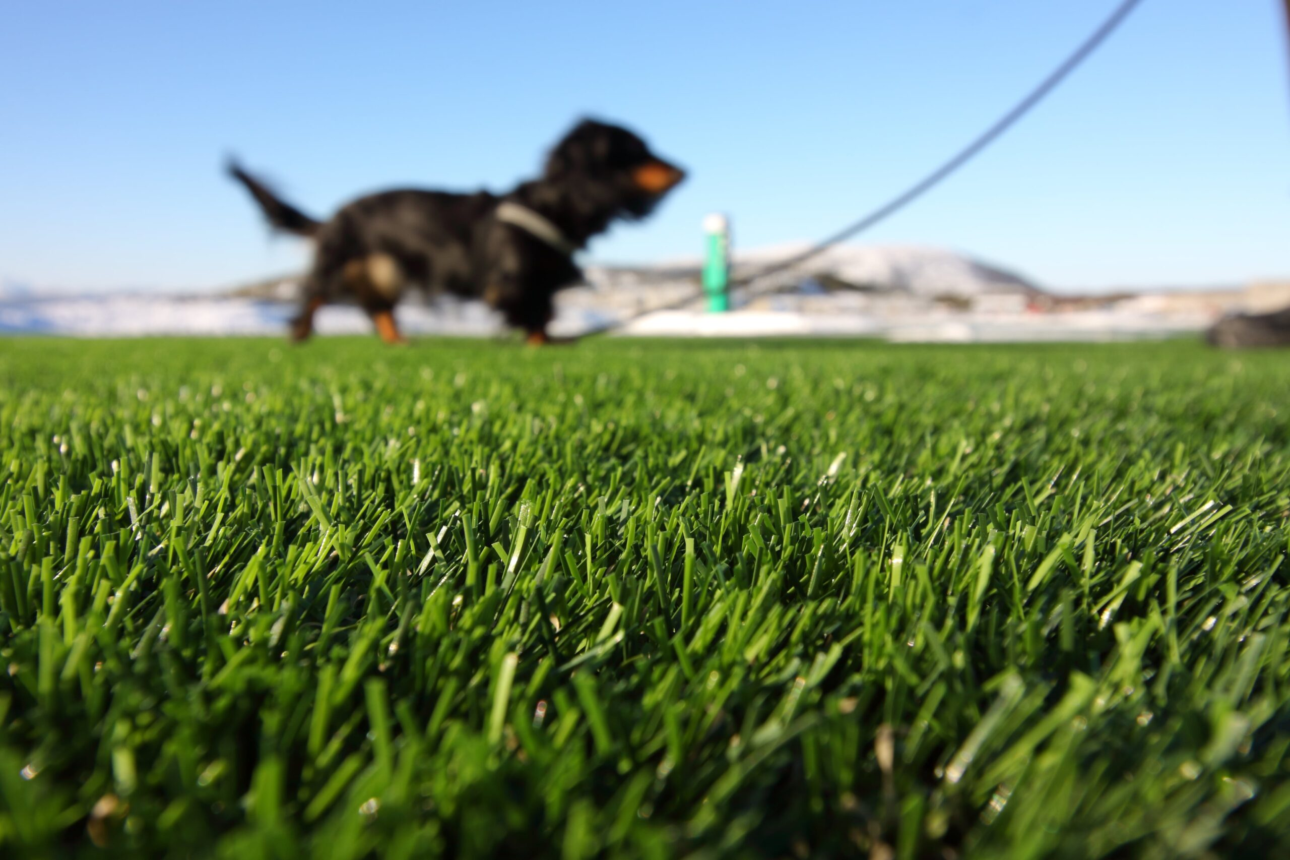 synthetic turf maintenance for dog