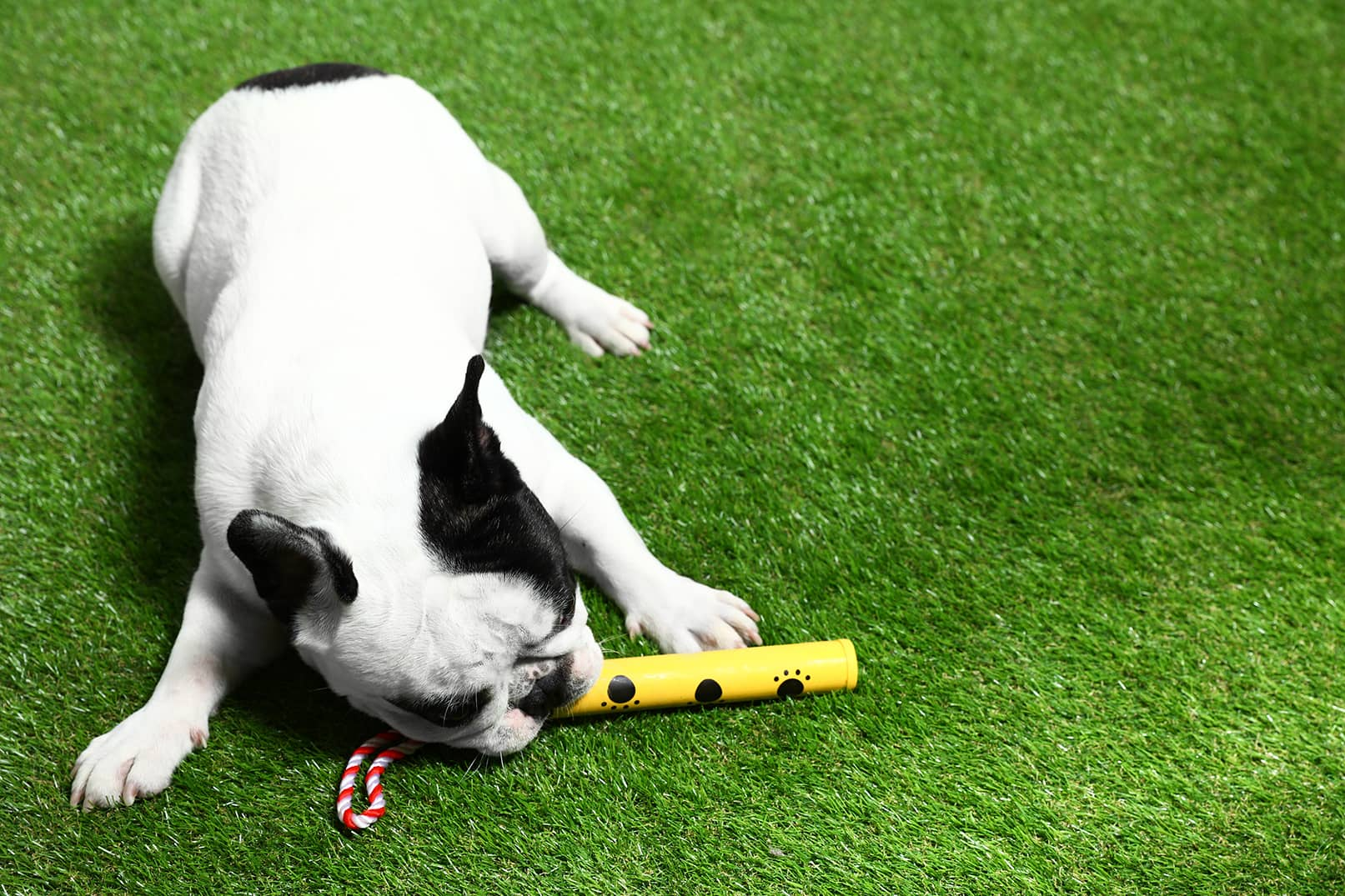Is the Best Artificial Grass For Dogs Durable Enough for My Pets